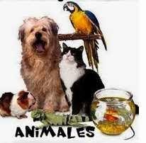 Animales, Animals