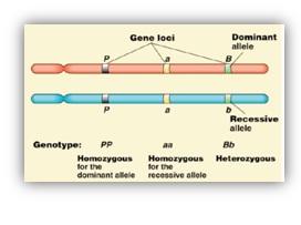Mutaciones y Remodelaciones Cromosómicas