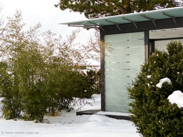 immergrüne Gehölze bringen frisches Grün in den sonst eher monochromen, winterlichen Garten