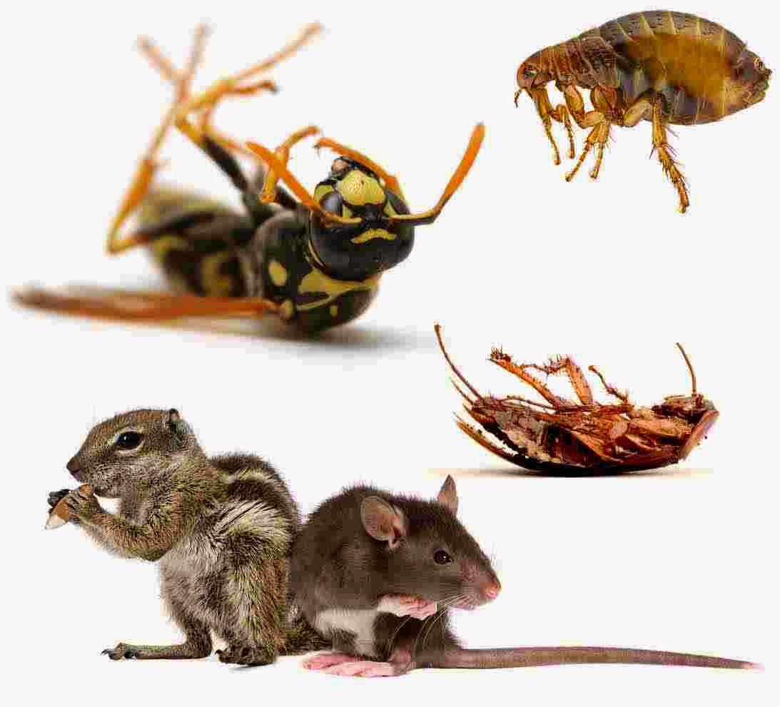 المركز الالماني لابادة الحشرات والفئران