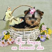 Que tengas un hermoso día - Perrito en canasta con flores y mensaje para compartir en facebook