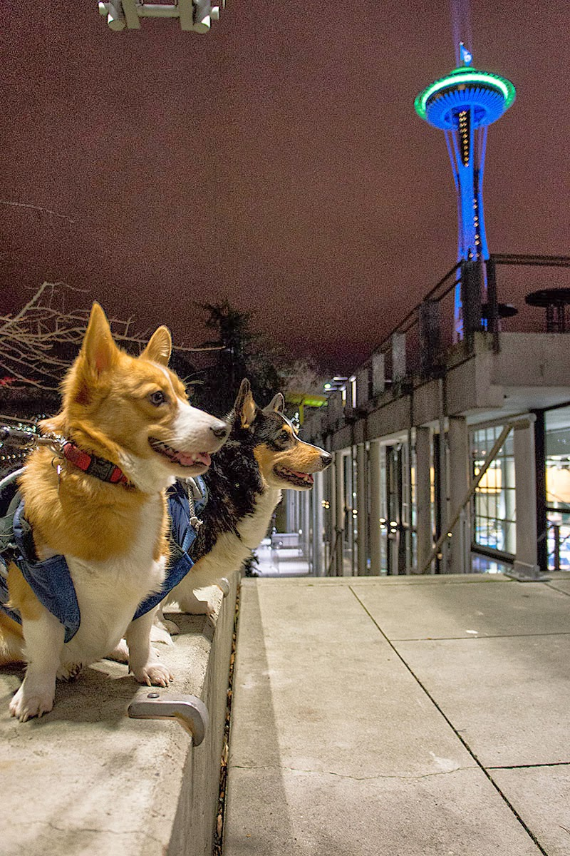 Corgis Blue and Green Space Needle