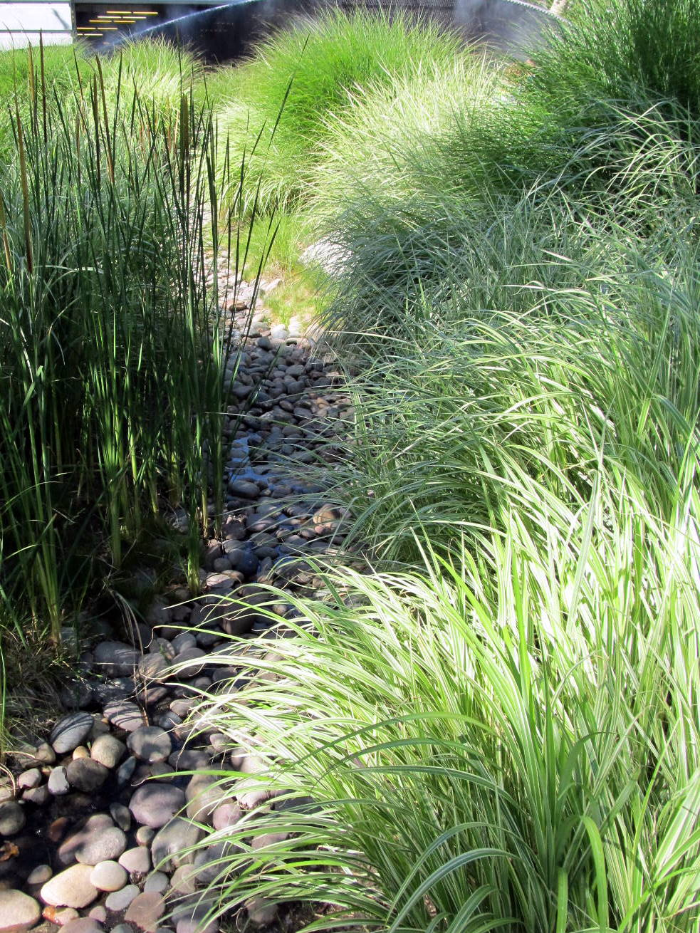 Fairy Yardmother Landscape Design Ornamental Grasses