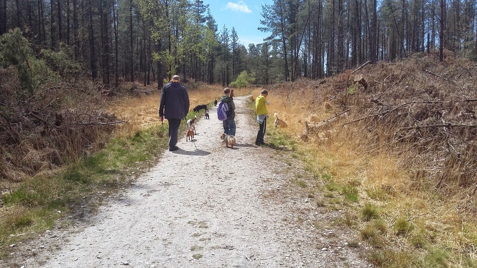 Wareham Forest Dog Walks