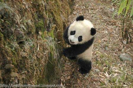 Nice panda.