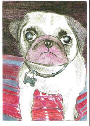 Pug Dog pic