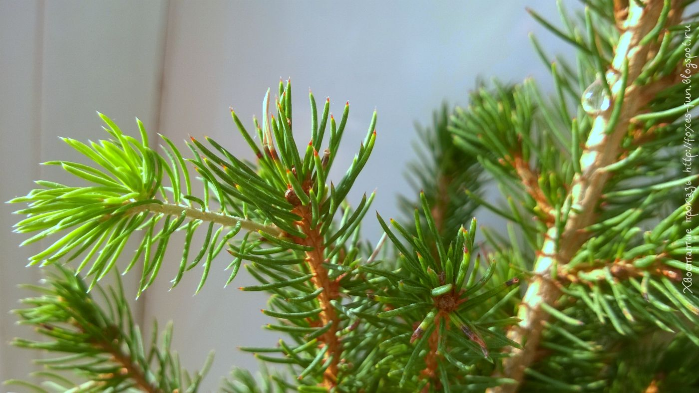 домашняя елка