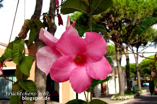 Blumen - Aufnahme aus Cavallino Italien Sommer 2012