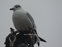Mast-Seagull