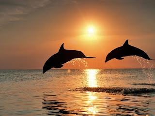 dolphins and sunset (17)