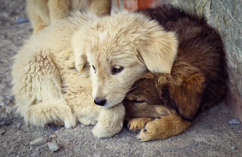 Two sad puppies cuddle up together on the street