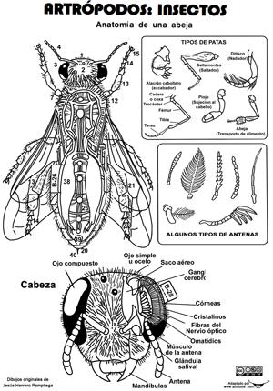 El arte de enseñar: Recortables anatomía de animales