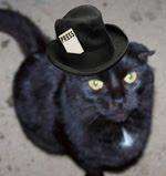 Cauli Le Chat