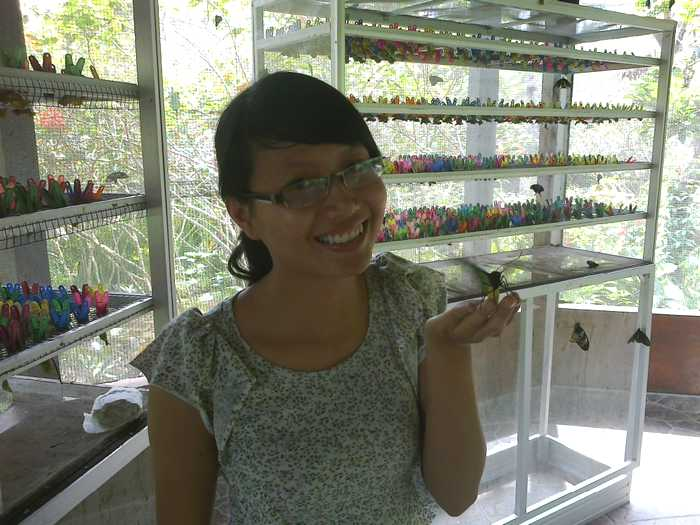 Butterfly breeding room in Bali Butterfly Park