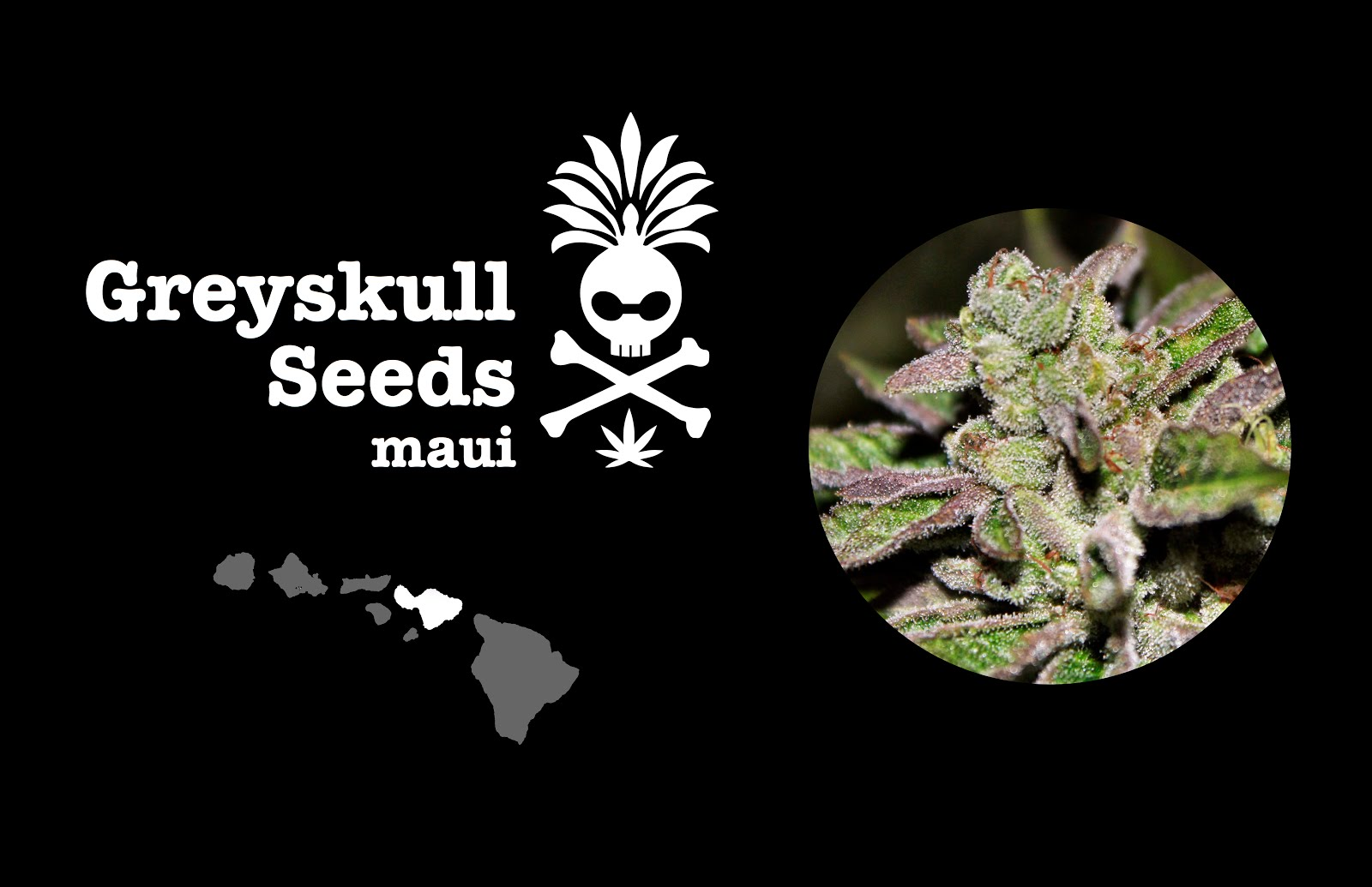 Greyskull Seeds