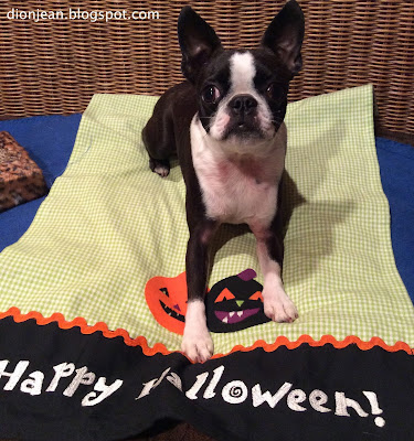 Sinead the Boston terrier and her Halloween decorations