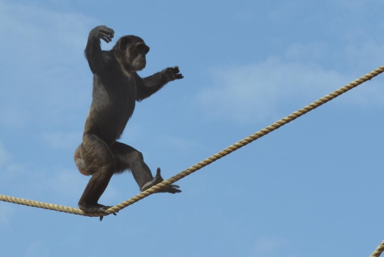 Baboon Butt Chimpanzee Butt I can ...