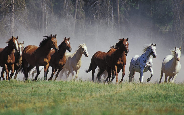 horses+wallpapers+%25285%2529