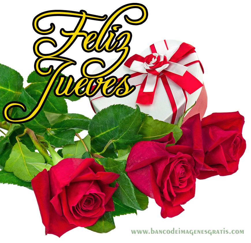 Hermosas rosas rojas con estrellitas brillantes Imágenes  - Imagenes De Rosa Rojas