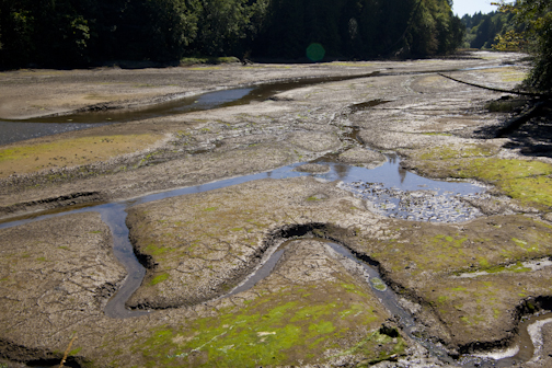 A Paddlers Guide To The Salish Sea Paddling The Low Tides