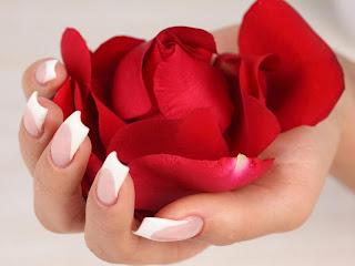 rosa y petalos rojos Rosas en las manos