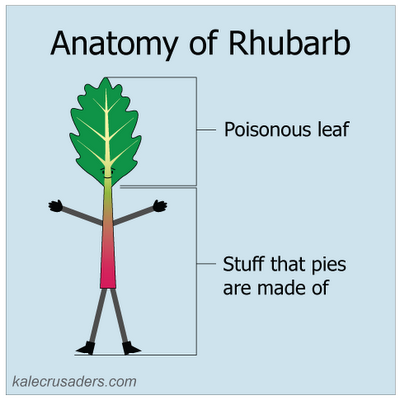 Anatomy of Rhubarb - Poisonous leaf & stuff that pies are made of