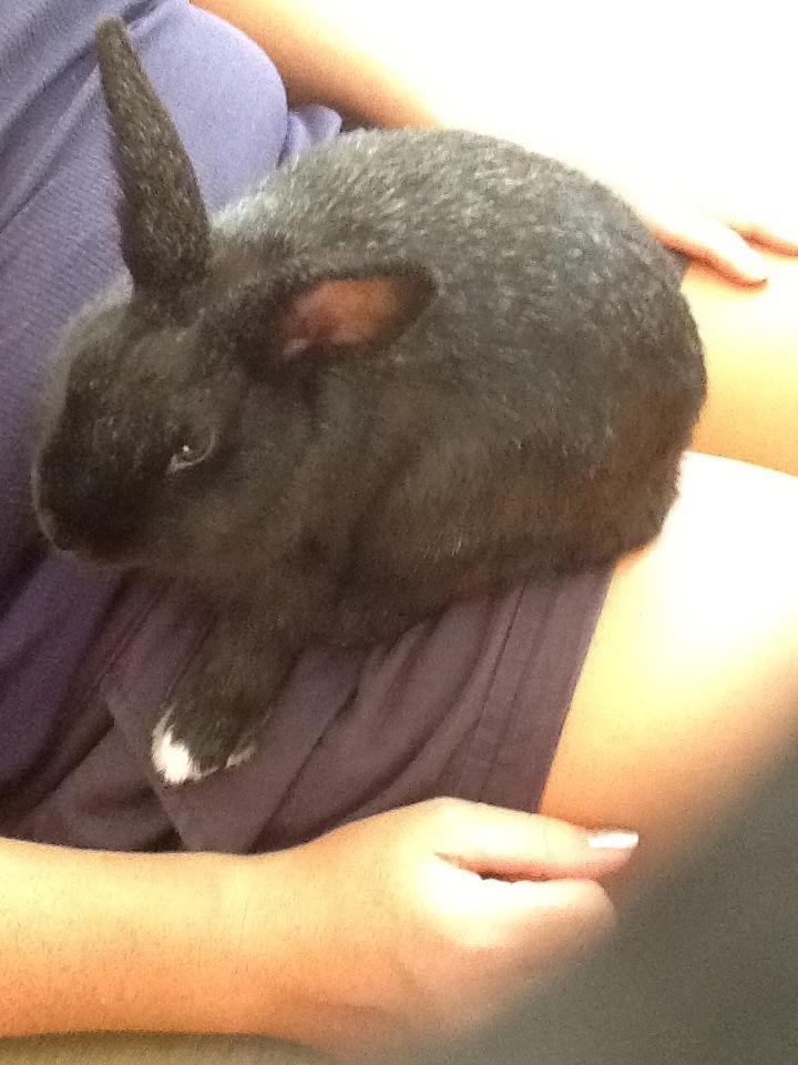 Gel rabbit vibrator
