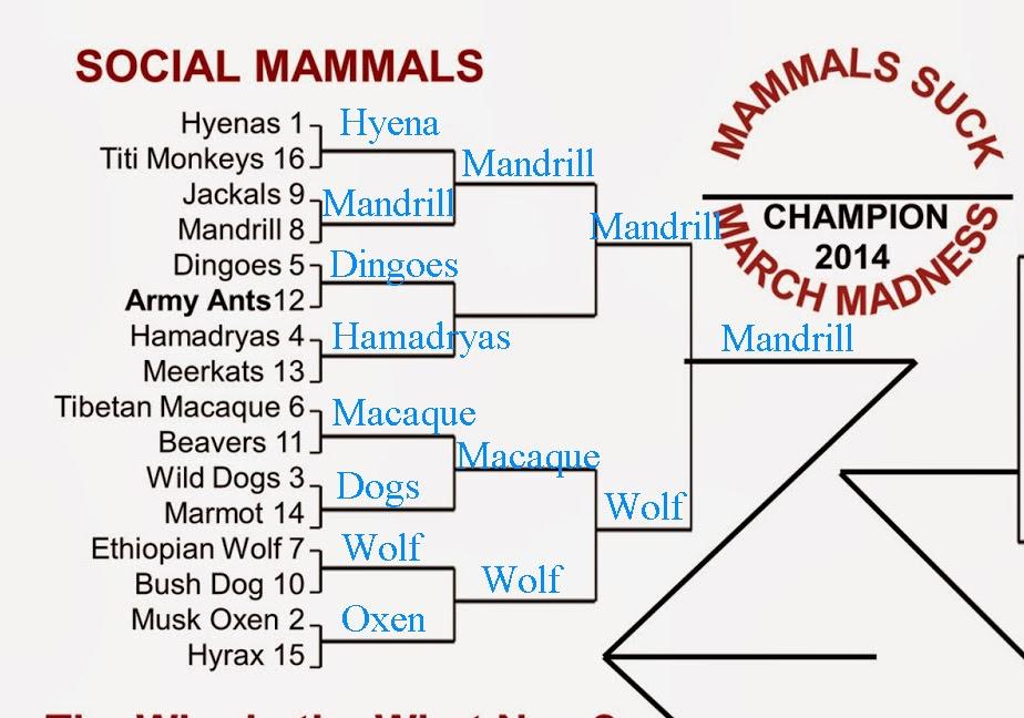 Copyright: http://mammalssuck.blogspot.com