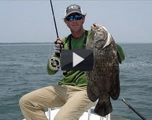 World Record Tripletail!