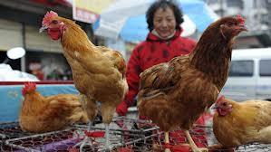 http://www.ciencia-online.net/2013/04/novo-virus-da-gripe-de-aves-6-coisas.html
