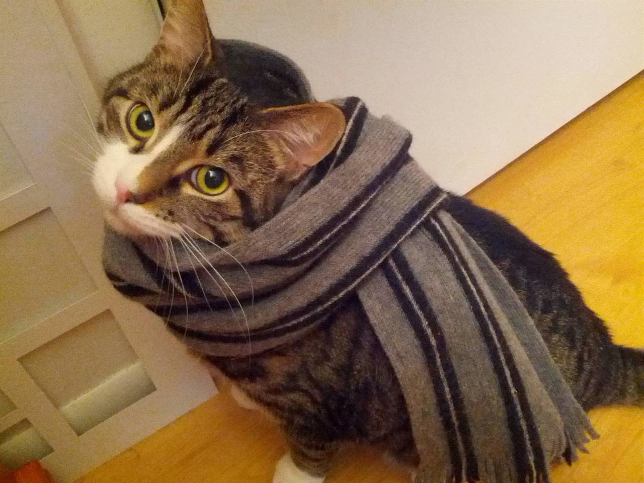 Funny cats - part 88 (40 pics + 10 gifs), cat wears a scarf