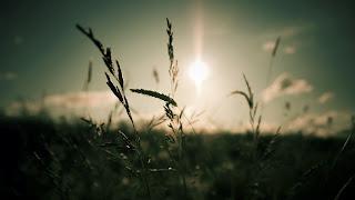 Nature Soft Cool Sun Light HD Wallpaper