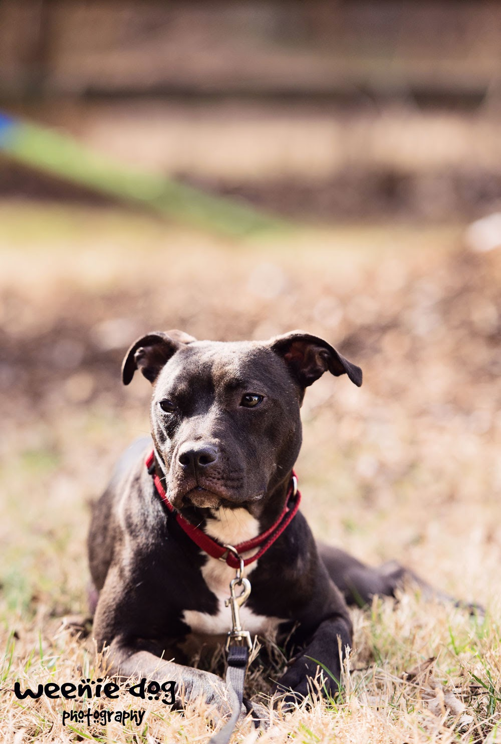 fearful dog | behavior modification