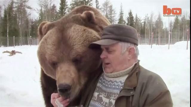 Un vieux joue avec des ours bruns, centre d'accueil pour ours