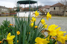 Narciso, a flor do mito