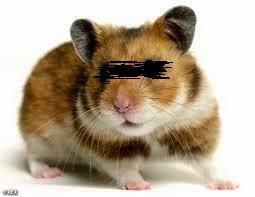 hukum memelihara hamster