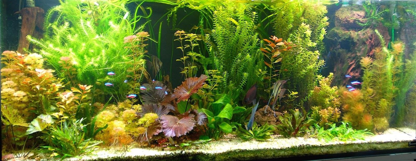 Produits anti-algues-engrais pour aquarium conditionneur eau pour ...