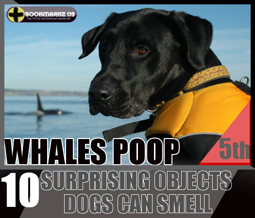 Can Whales Be Trained Like Dogs