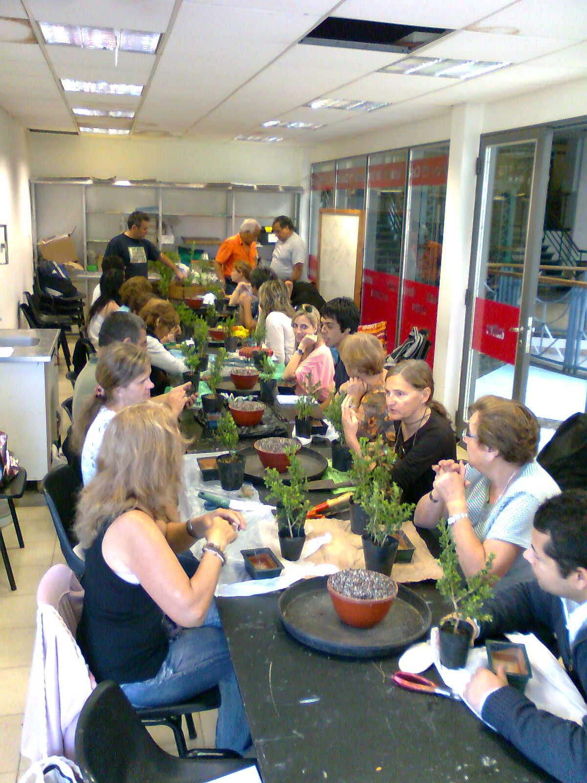 Mrtree Argentina Bonsai Study Group 1 Taller Del Ciclo 2013