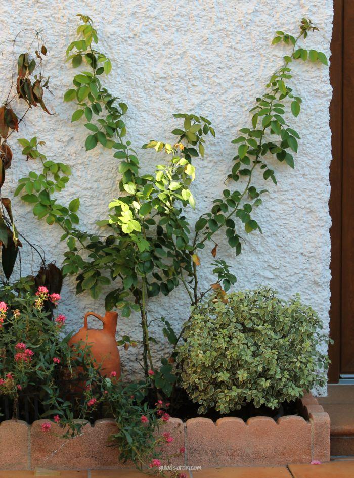 Un d a soleado de oto o plantas y flores de mi terraza - Plantas para arriates ...