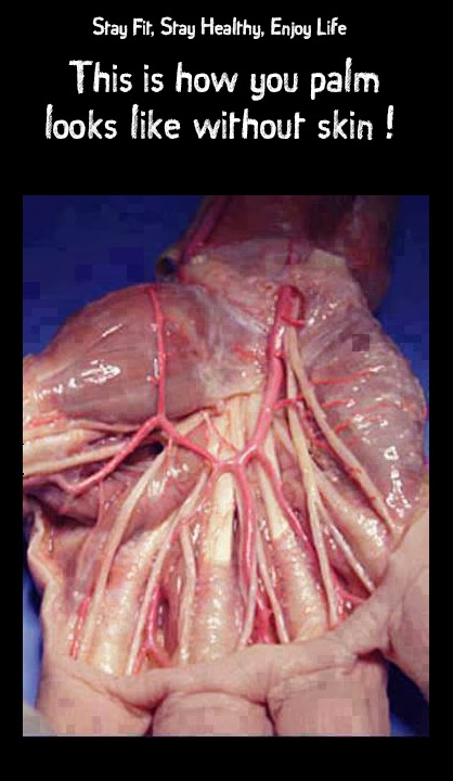 This is how you palm looks like without skin !
