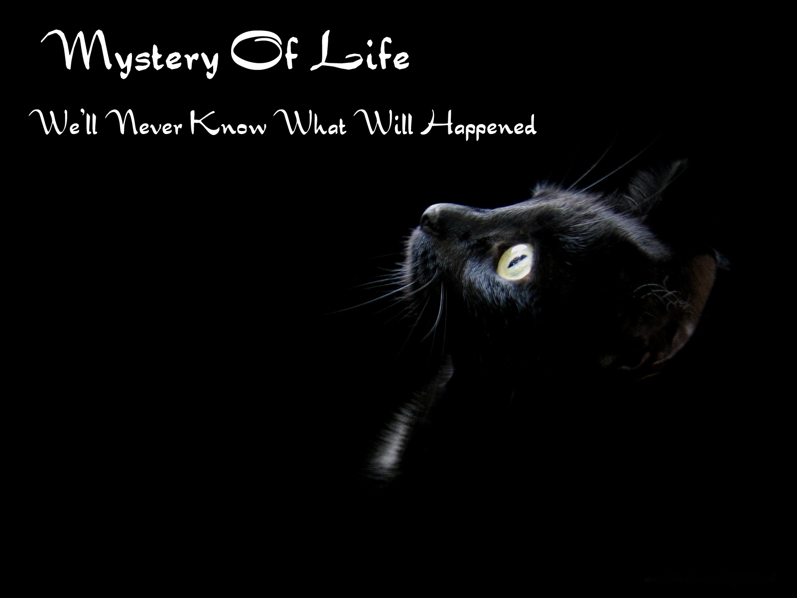 life is full of mystery essay I am 62 years old, and life is still mostly mysterious to me, if, by mysterious, we  mean unpredictable and inexplicable it would be dreadful to me if it were not.