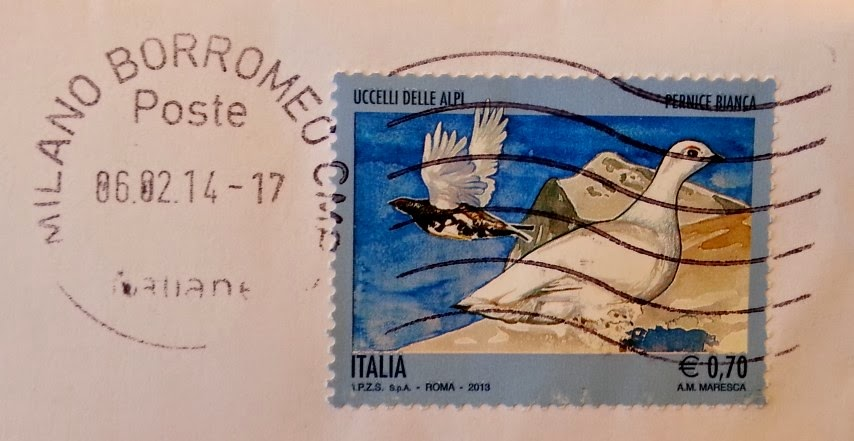 Pernice bianca - Uccelli delle Alpi