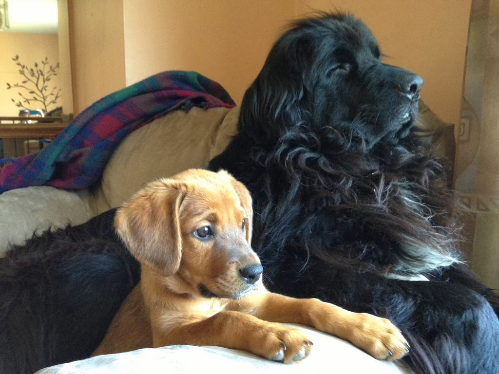 Cute dogs - part 9 (50 pics), puppy poses with adult dog