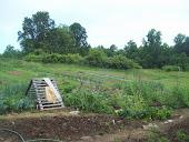 Garden May 2012