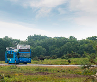 Open Top Tour Bus returns for New Forest Summer 2015