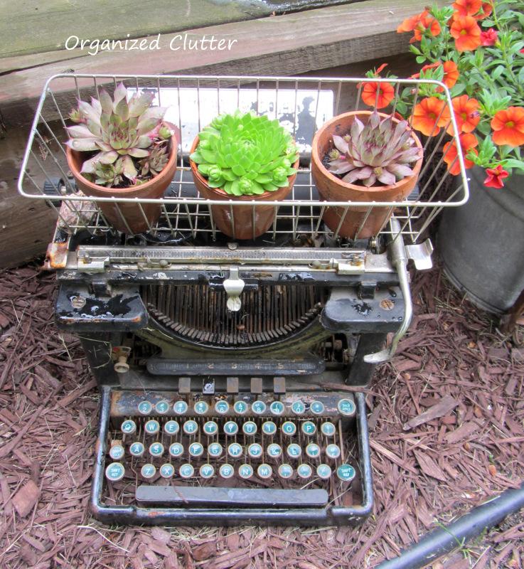Vintage Container Gardens www.organizedclutterqueen.blogspot.com