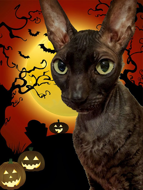 Cornish Rex Halloween Cat