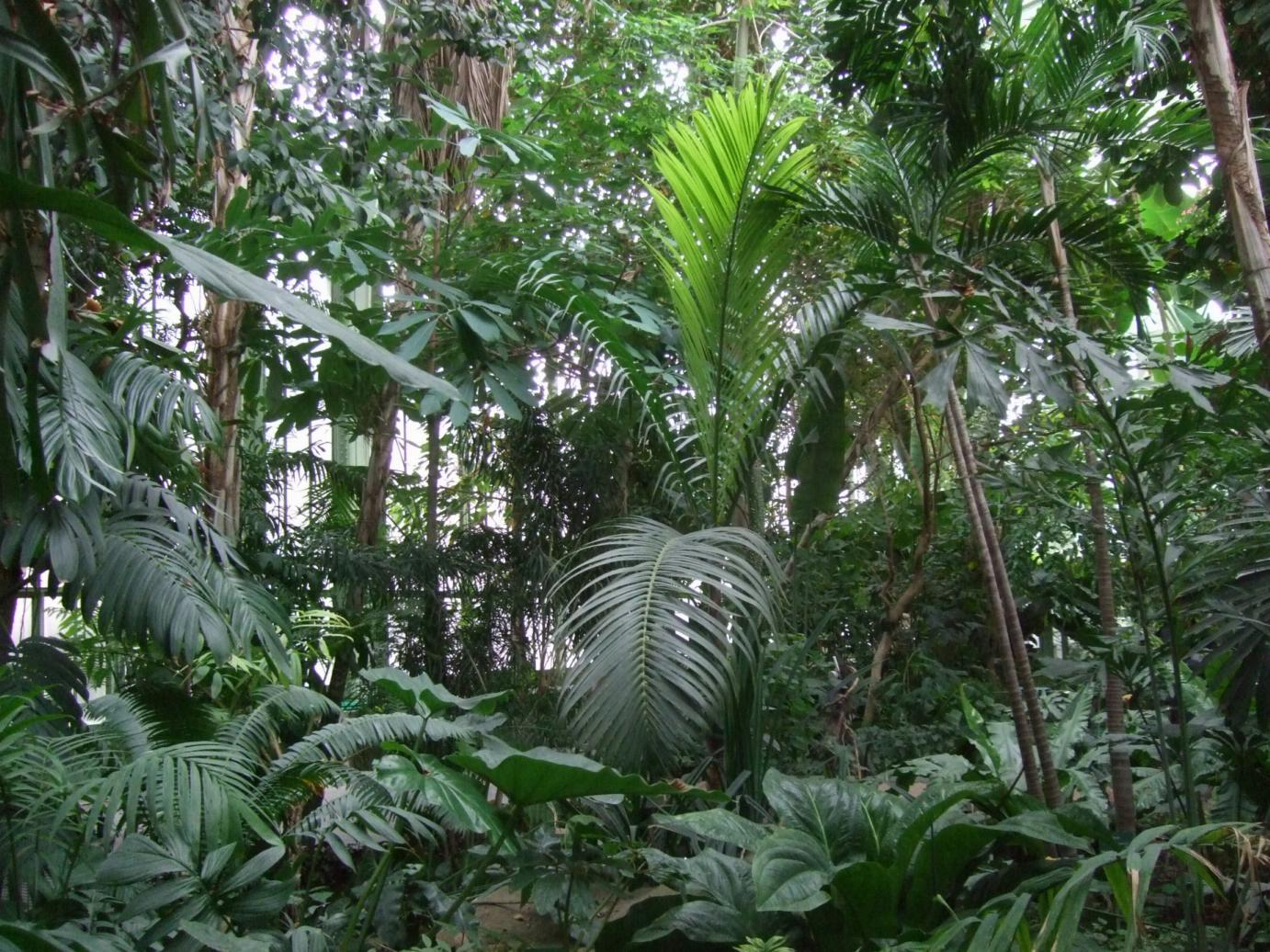 Alternative eden exotic garden tropical rainforest for Jardin ds plantes