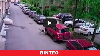 Ένα Toyota RAV4 έγινε σκυλοτροφή!